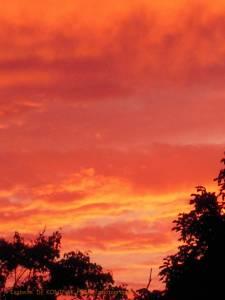 site dekoninckferey 2011 soleil 1
